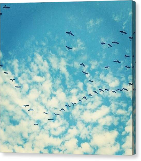 Geese Canvas Print - Canadian Geese. South For The Winter by Carlos Caceres