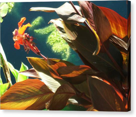 Canna Lily And Water In San Angelo Civic League Park Canvas Print