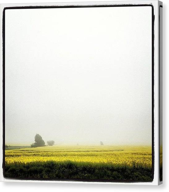 Large Birds Canvas Print - Canola And Fog by Marc Crow