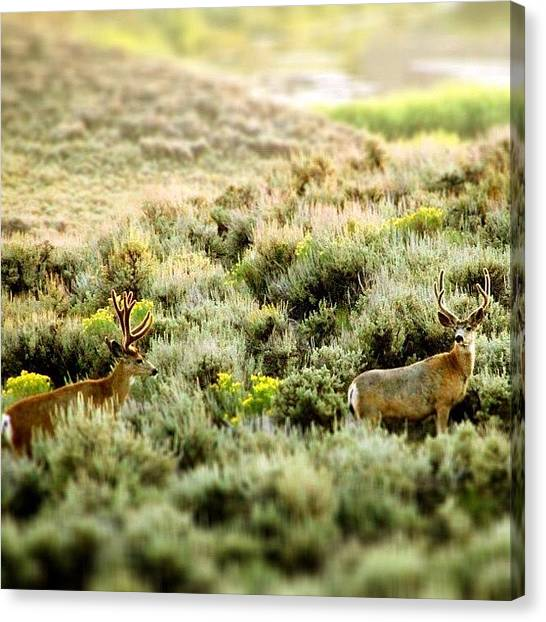 Wyoming Canvas Print - Canon 60d Shot With Iphone Edits!  Big by Lisa King