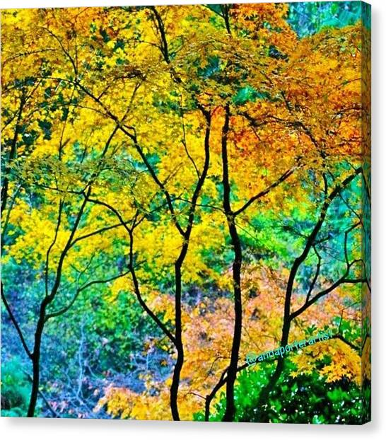 Orange Tree Canvas Print - Canopy Of Life by Anna Porter