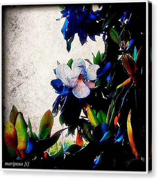 Edit Canvas Print - Canvas Magnolia by Mari Posa