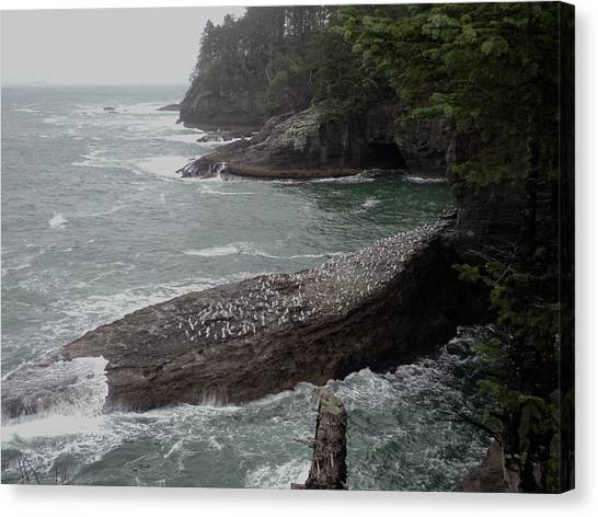 Cape Flattery Shoreline Canvas Print by Fred Russell