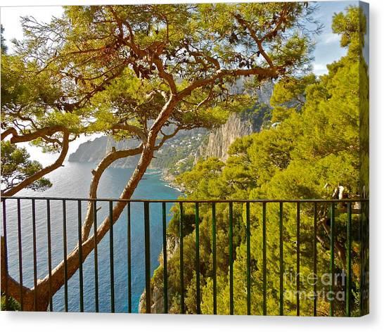 Capri Panorama With Tree Canvas Print