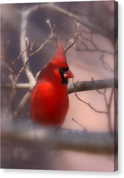 Cardinal - Unafraid Canvas Print