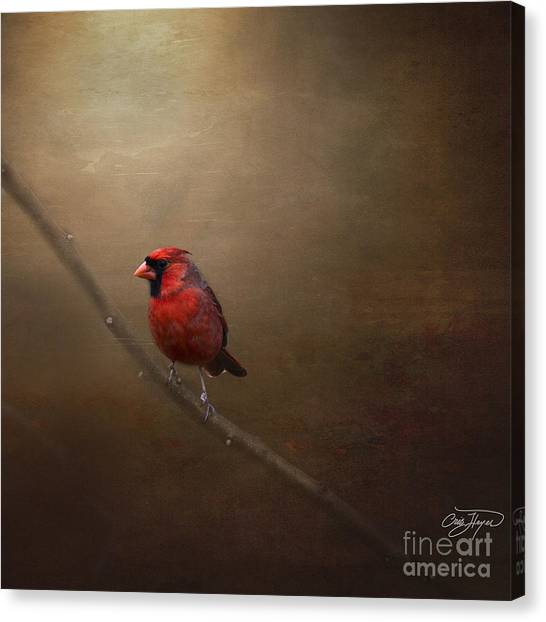 Cardinal Old Master - Artist Cris Hayes Canvas Print