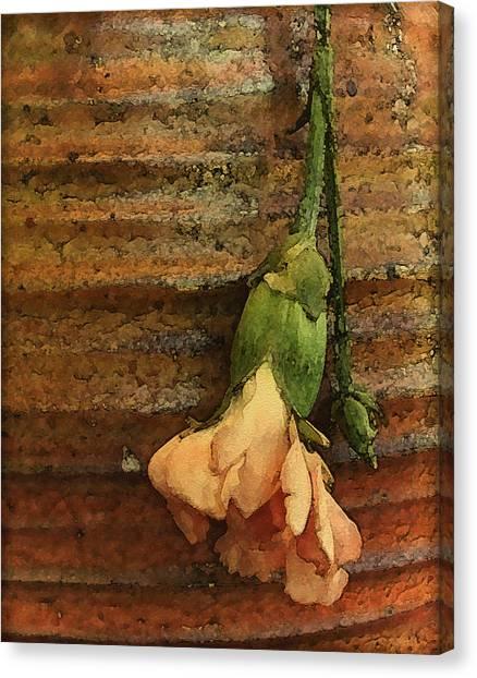 Albuquerque, New Mexico - Carnation Canvas Print