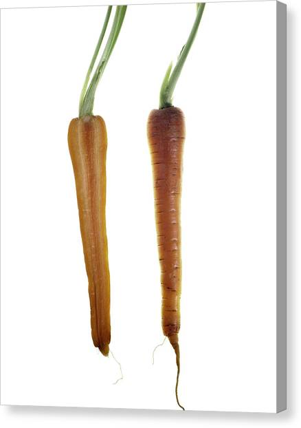 Carrot Canvas Print by Nathaniel Kolby