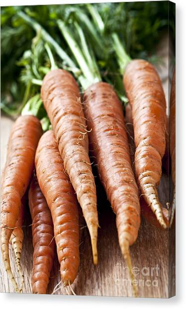 Carrot Canvas Print - Carrots by Elena Elisseeva