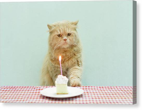 Birthday Canvas Print - Cat About To Bllow A Candle by Nga Nguyen