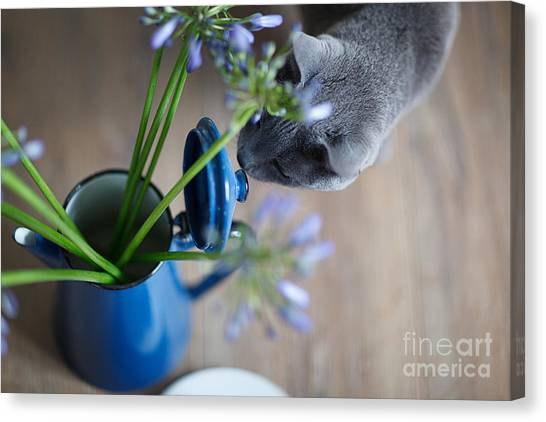 Russian Blue Canvas Print - Cat And Flowers by Nailia Schwarz