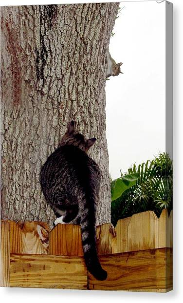 Manx Cats Canvas Print - Cat And Squirrel Game by Kathleen Horner