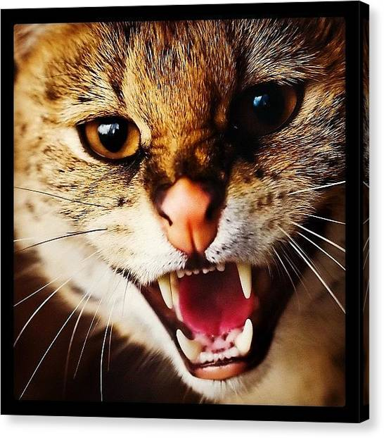 Teeth Canvas Print - #cat #angry #look #tooth #nose #red by Daniel Leontiev