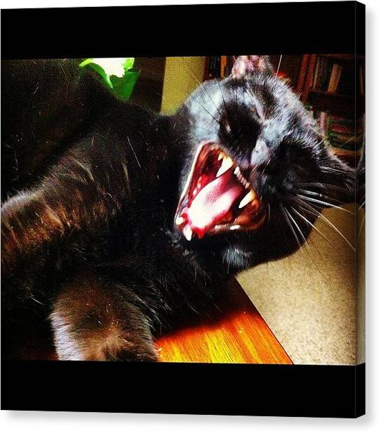 Teeth Canvas Print - #cat #animal #pet #funny #laughable by Some Guy
