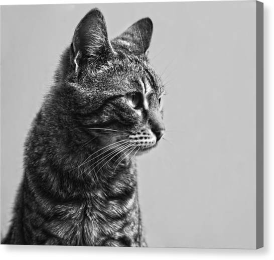 Cat Canvas Print by Chelaru Catalin Ionut