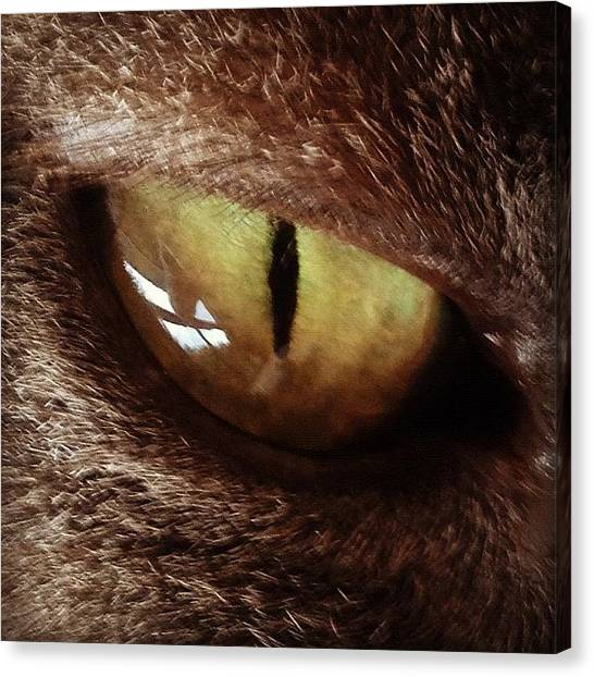 Igersoftheday Canvas Print - Cat Eye by Cameron Bentley