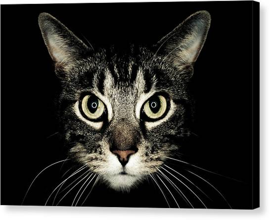 Cat Canvas Print - Cat Face by by Jonathan Fife
