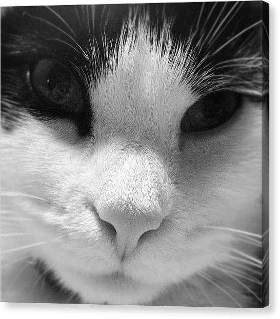 Tigers Canvas Print - Cat Face Shot by Rachel Williams