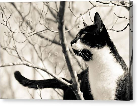 Cat In A Tree In Black And White Canvas Print
