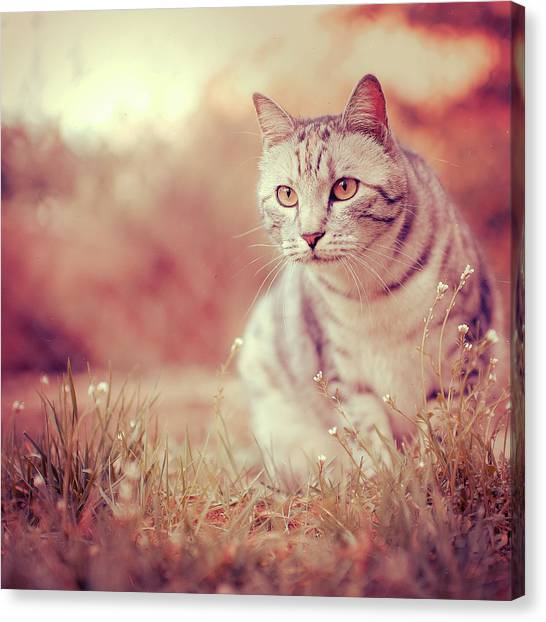 Cats Canvas Print - Cat In Grass by Alberto Cassani