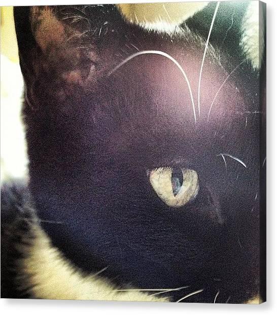 Tuxedo Canvas Print - #cat #instacat #tuxedocat #tuxedo #pet by Eva Martinez