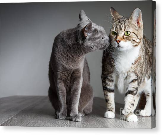 Purebred Canvas Print - Cat Kiss by Nailia Schwarz