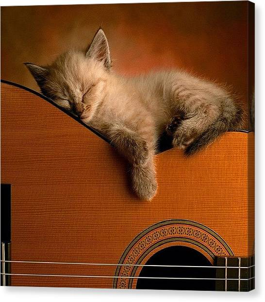 Yamaha Canvas Print - #cat #kitten #sleeping #guitar #cute by Daniel Leontiev