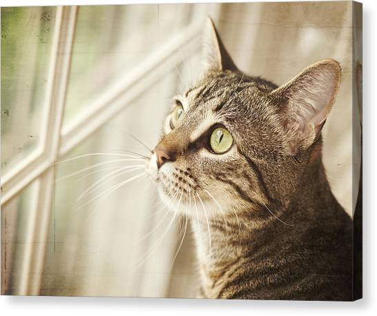 Head And Shoulders Canvas Print - Cat Looking At Window by Jody Trappe Photography