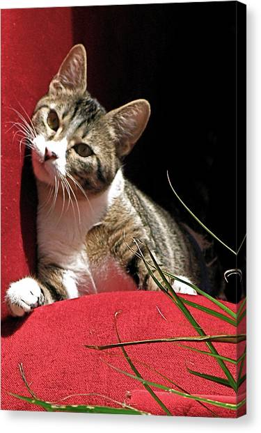 Cat On Red Canvas Print by Inga Smith