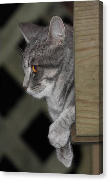 Cat On Steps Canvas Print