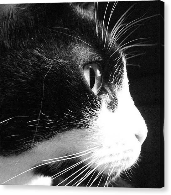 Lions Canvas Print - Cat Side View by Rachel Williams
