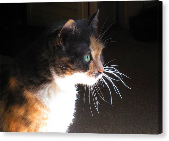 Calico Cat Canvas Print - Cat Whiskers by Sue Halstenberg