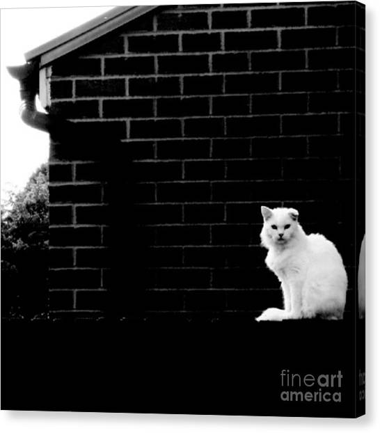 White Canvas Print - Cat With A Floppy Ear by Isabella Shores