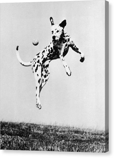 Catch It Spotty Canvas Print by Three Lions