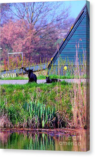 Cats At The Canal Canvas Print