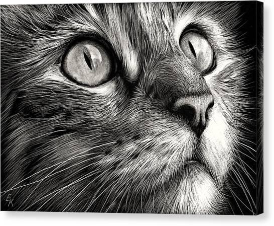 Cat's Face Canvas Print