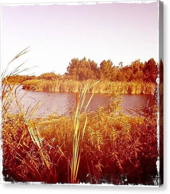 Ponds Canvas Print - #cattail #orlando #fl #florida by James Roberts