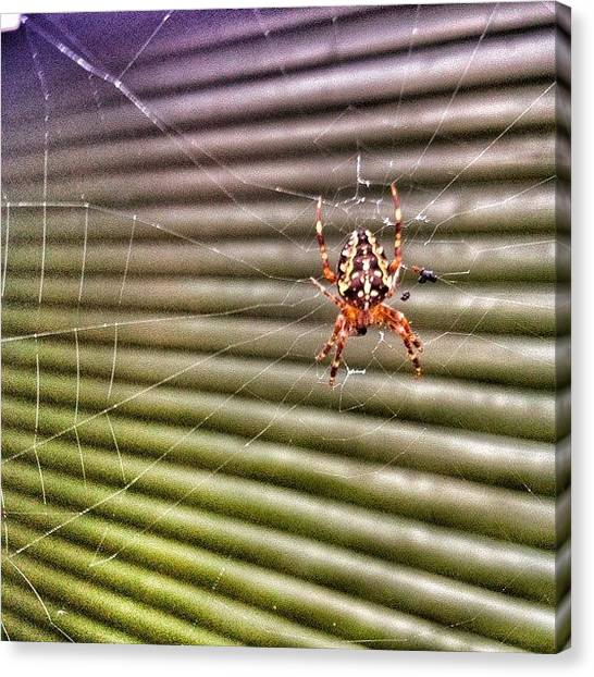 Spider Web Canvas Print - Caught This Little Fellah Outside by René Rep Pedersen