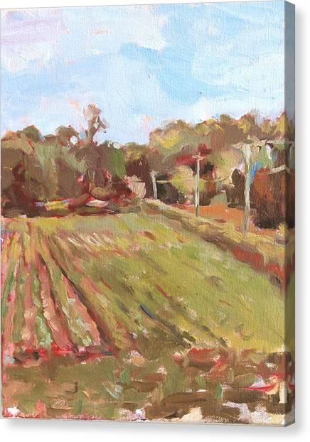 Cedar Creek Corn Canvas Print by Jenny Anderson