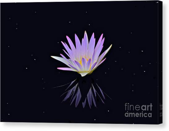 Celestial Waterlily Canvas Print
