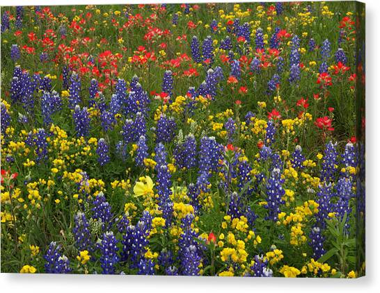 Central Texas Mix Canvas Print