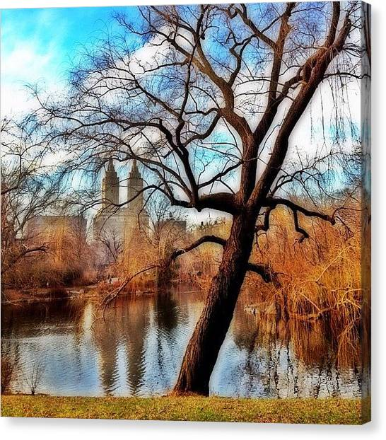 Skylines Canvas Print - #centralpark #park #outdoor #nature #ny by Joel Lopez