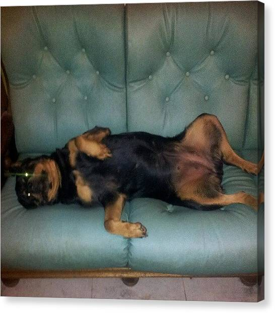 Rottweilers Canvas Print - C'est Ma Place. Is My Bed by Branchard  Arnaud
