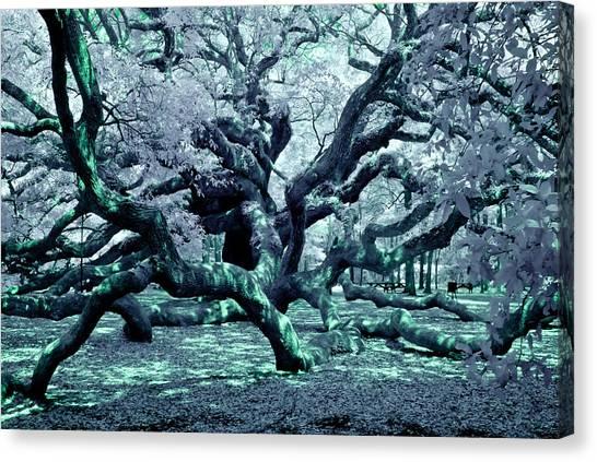 Charleston's Angel Oak Canvas Print