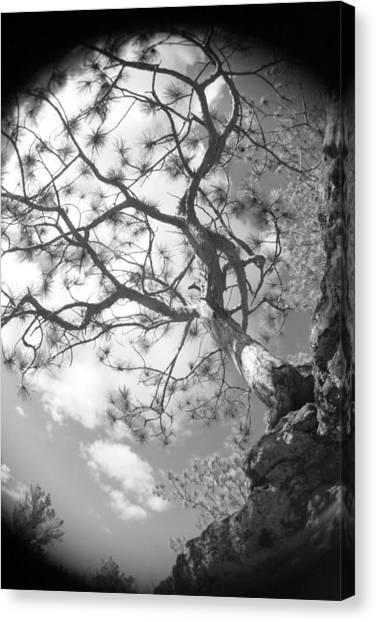 Charlie's Tree Canvas Print by Artist Orange