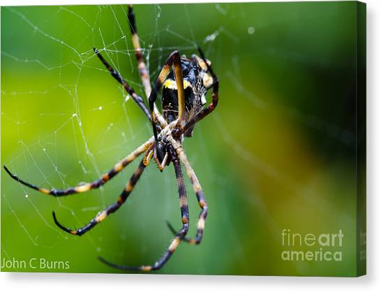 Charlotte's Web Canvas Print by John Burns