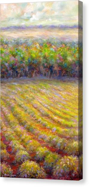 Chateau De Berne Vineyard Canvas Print