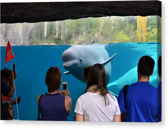 Checking Out Todays Crowd Canvas Print by William Hensler