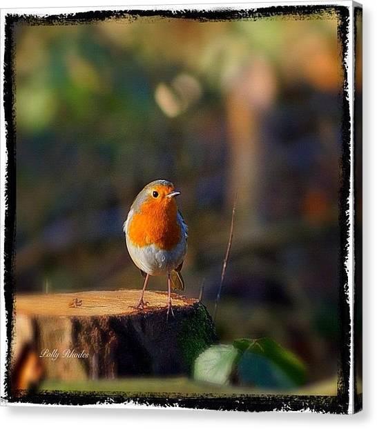 Robins Canvas Print - Cheeky Robin Redbreast #robin by Polly Rhodes