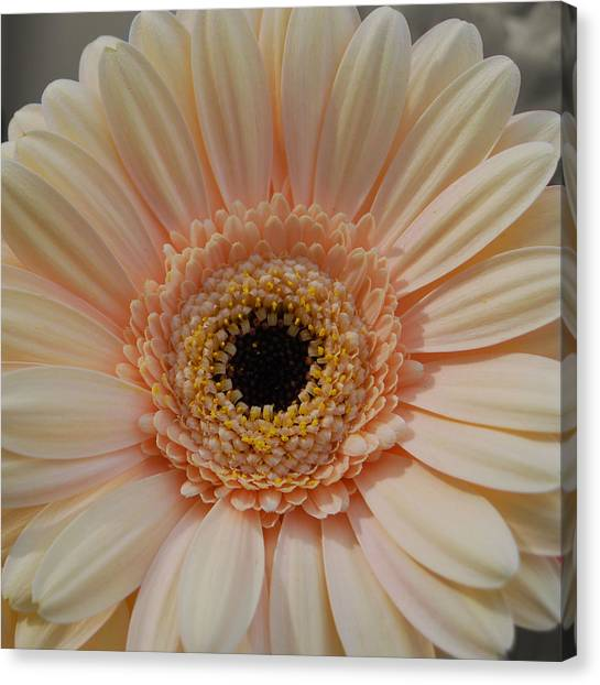 Cheeriest Flower Canvas Print by JAMART Photography